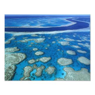 O grande recife de coral convite 10.79 x 13.97cm