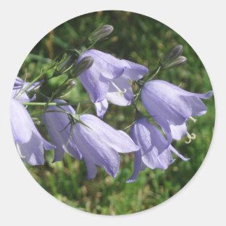 O harebell bonito floresce a etiqueta da foto adesivo