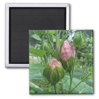 O hibiscus brota o ímã ímã quadrado