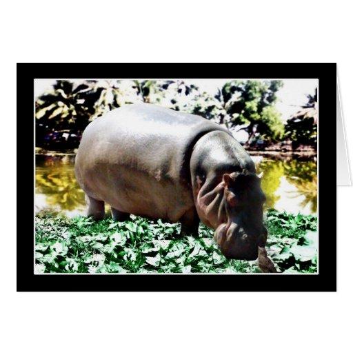 O hipopótamo e o pássaro cartoes