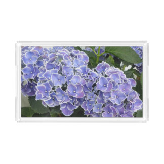 O Hydrangea azul floresce a bandeja da vaidade