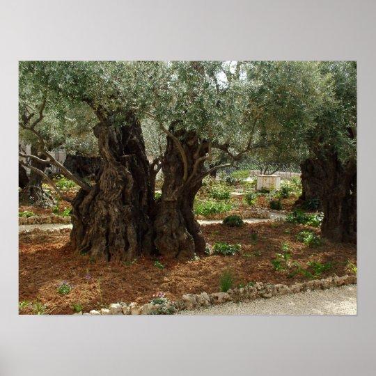 O jardim do Getsêmani em Jerusalem, a Cidade Santa Pôster