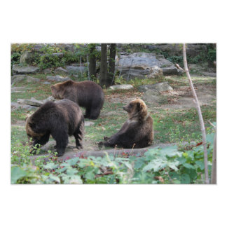 O jardim zoológico carrega sentar o poster das