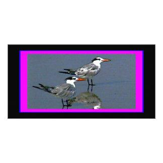 O jGibney Birds2CocoaBeach1 da série do artista do Cartão Com Foto