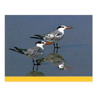O jGibney Birds2CocoaBeach1 da série do artista do Cartão Postal