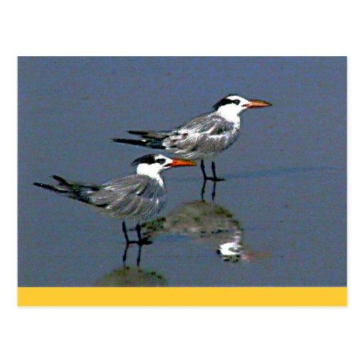 O jGibney Birds2CocoaBeach1 da série do artista do Cartao Postal