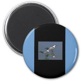 O jGibney Birds2CocoaBeach1 da série do artista do Ímã Redondo 5.08cm