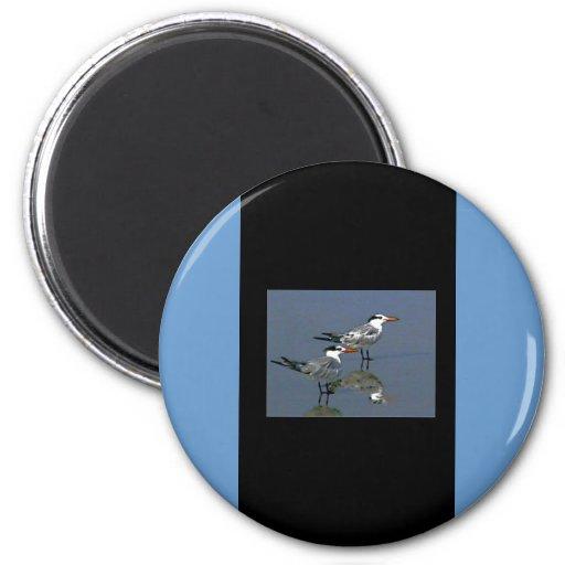 O jGibney Birds2CocoaBeach1 da série do artista do Ima