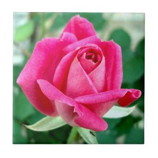 O KO dobro cor-de-rosa aumentou