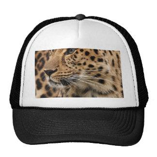 O leopardo boné