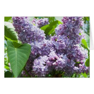 O Lilac francês obtem o modelo bom do cartão