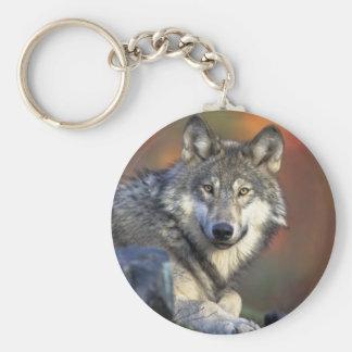 O lobo chaveiro