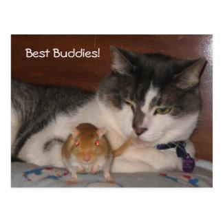 O melhor cartão dos amigos
