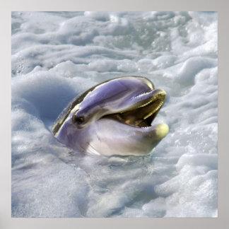 O melhor sorriso de um golfinho impressão