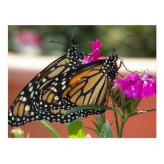 O monarca junta #1-postcards cartão postal