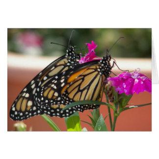 O monarca junta cartões de #1-Greeting