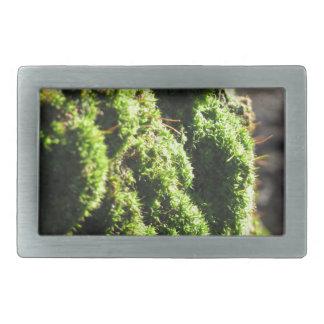 O musgo verde no detalhe da natureza de musgo