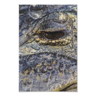 O olho de um jacaré impressão fotográfica