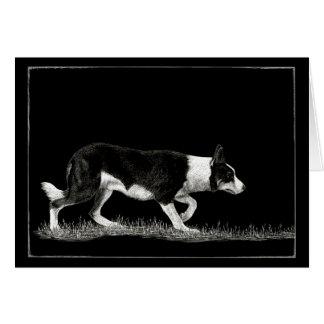 """O """"olho vê o cartão de border collie da ovelha"""" -"""