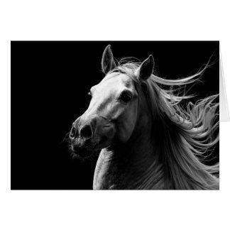 O orgulho do garanhão branco - cartão do cavalo