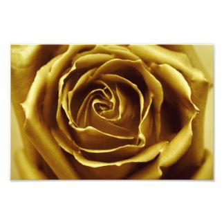 O ouro elegante aumentou impressão de foto