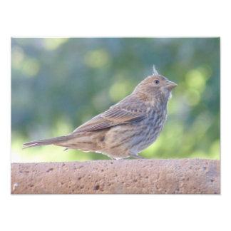 O passarinho com uma surpresa cabelo-faz impressão de foto