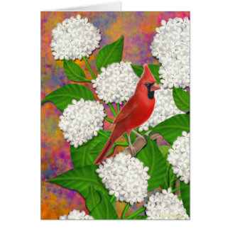 O pássaro cardinal vermelho no Hydrangea floresce  Cartões