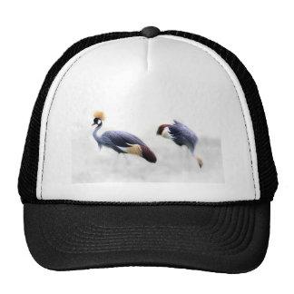 o pássaro coroado cinza do guindaste voa penas boné