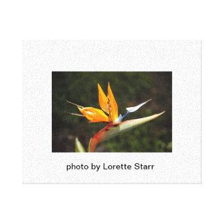 O pássaro da foto do paraíso por Lorette Starr env Impressão De Canvas Envolvidas