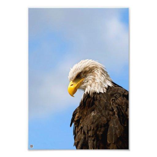 O pássaro de Pray a águia americana Foto