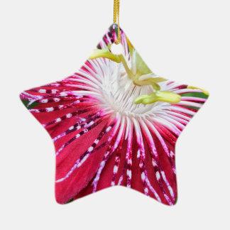 O Passionflower Dble-Tomou partido ornamento da