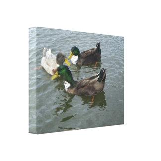 O pato selvagem do trio Ducks o envoltório das Impressão Em Canvas
