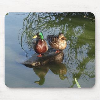 O pato selvagem Ducks #2 Mousepad