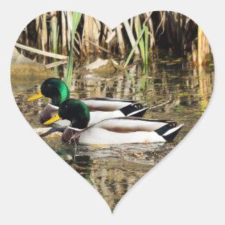 O pato selvagem Ducks a etiqueta dada forma