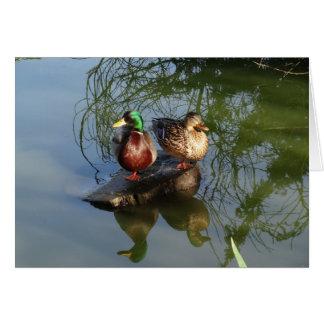O pato selvagem Ducks o cartão #2