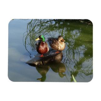 O pato selvagem Ducks o ímã da foto #2