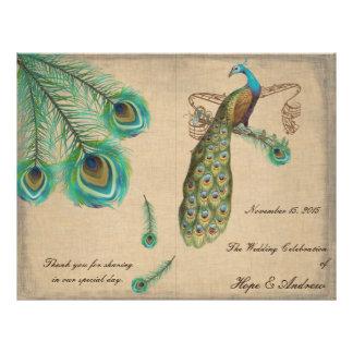 O pavão empluma-se bordas queimadas programa do panfleto coloridos