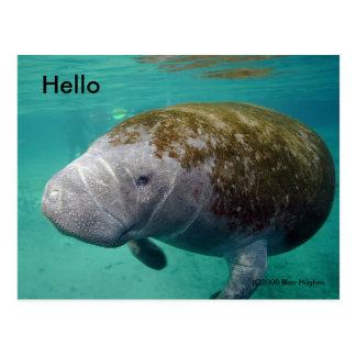 """O peixe-boi fecha acima 0258"""" olá!"""" cartão"""