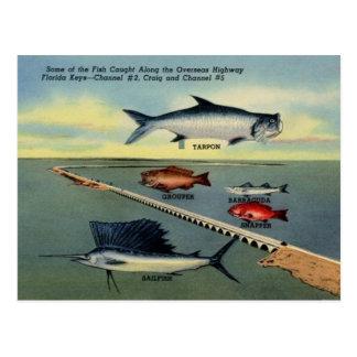 O peixe do vintage de Florida fecha o cartão