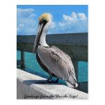 O pelicano no Florida fecha o cartão Cartão Postal