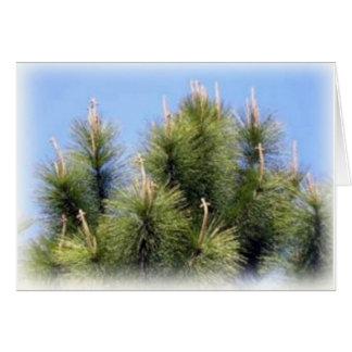 o pinheiro cruza cartões