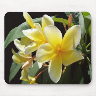O Plumeria amarelo floresce Mousepad