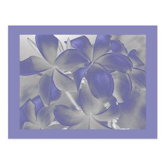 O Plumeria sombreia o cartão azul e cinzento