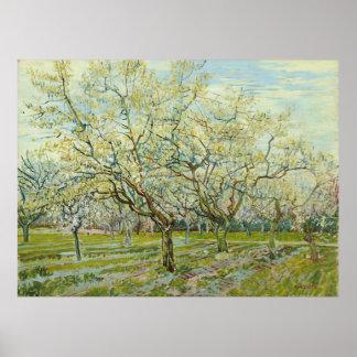 O pomar branco por Vincent van Gogh Pôster