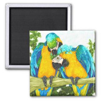 O ponto doce - Macaws do azul & do ouro Ímã Quadrado