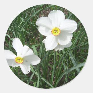 O primavera branco bonito floresce CricketDiane Adesivo