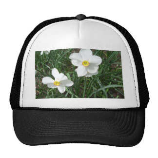 O primavera branco bonito floresce CricketDiane Boné