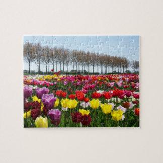 O primavera das tulipas do quebra-cabeça está no