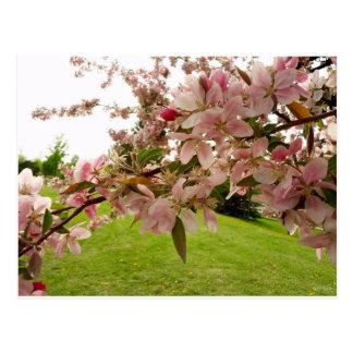 O primavera floresce cartão