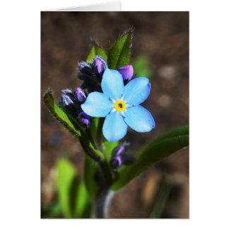 O primavera floresce o cartão